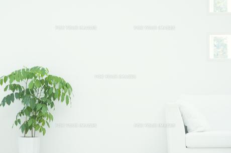 観葉植物とソファのあるインテリアの素材 [FYI00934737]