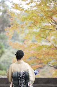 和服の日本人女性の素材 [FYI00934865]