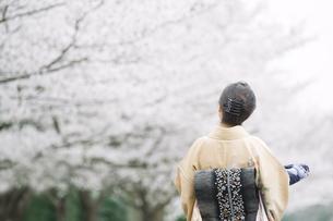後姿の和服の日本人女性の素材 [FYI00934879]