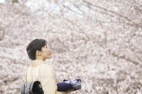 見上げる和服の日本人女性の素材 [FYI00934933]