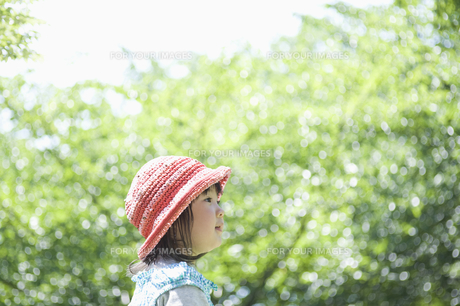 新緑を見上げる女の子の素材 [FYI00934956]
