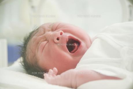 泣く新生児の素材 [FYI00935034]