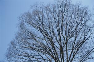 樹木と空の素材 [FYI00936344]