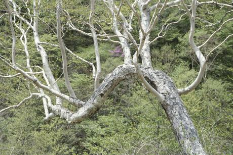 樹木の素材 [FYI00936402]