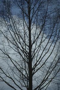 立木と空の素材 [FYI00936406]
