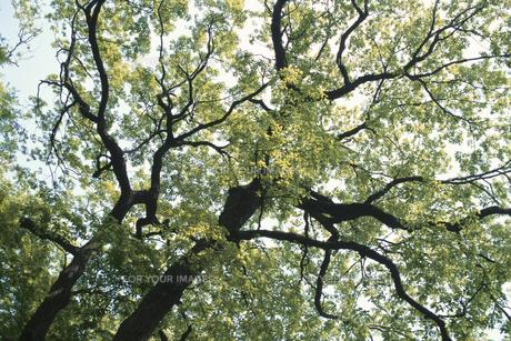 樹木の素材 [FYI00936417]