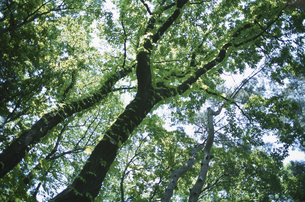 樹木の素材 [FYI00936420]