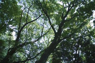 樹木の素材 [FYI00936452]