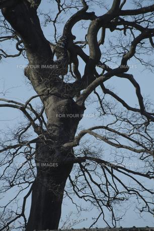 樹木と空の素材 [FYI00936460]