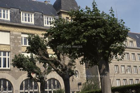 建物と並木の素材 [FYI00937197]