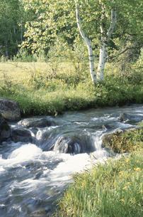 白樺と渓流の素材 [FYI00937957]