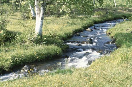 白樺と渓流の素材 [FYI00937969]