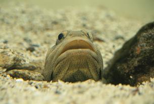 魚の素材 [FYI00938482]