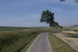 小道と田園風景 フランスの素材 [FYI00938534]