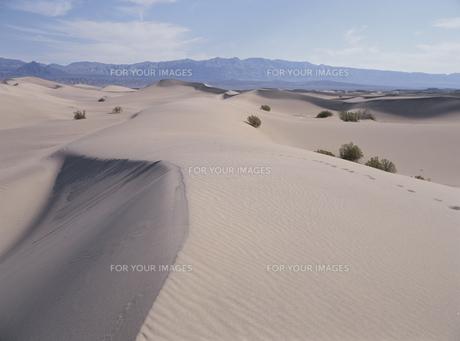 砂丘の素材 [FYI00939139]