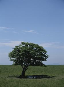 一本の木の素材 [FYI00939150]