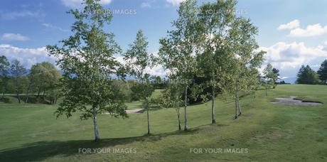 ゴルフ場の木の素材 [FYI00939223]