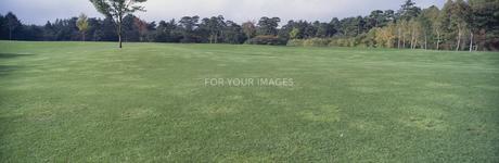 ゴルフ場の芝生の素材 [FYI00939236]