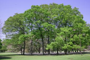 新緑の木の素材 [FYI00939272]