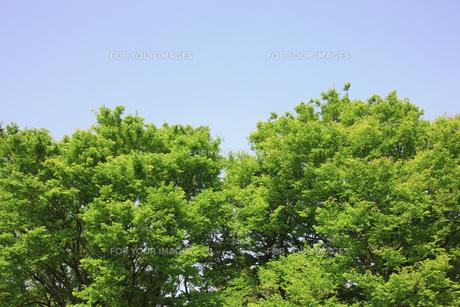 新緑の素材 [FYI00939545]
