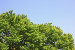 新緑の素材 [FYI00939591]
