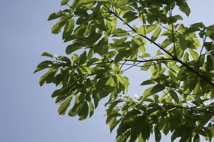 新緑の葉と青空の素材 [FYI00939877]