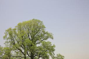 新緑の樹と青空の素材 [FYI00939936]