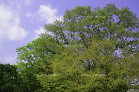 新緑の素材 [FYI00939950]