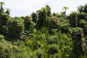 熱帯植物の素材 [FYI00940399]