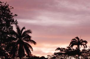 ヤシの木と夕焼けの素材 [FYI00940571]