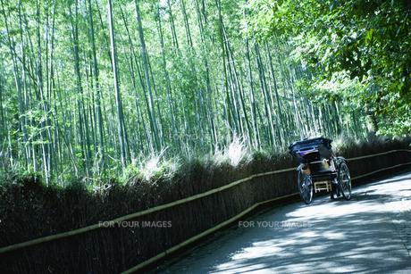 嵐山の竹林を走る人力車の素材 [FYI00940599]