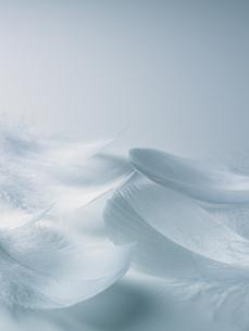 ブルーバックの白い羽根の素材 [FYI00940717]
