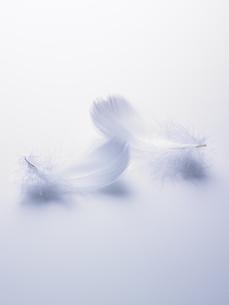 ブルーバックの白い羽根の素材 [FYI00940731]