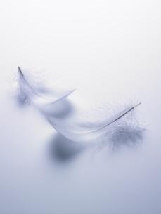 ブルーバックの白い羽根の素材 [FYI00940752]