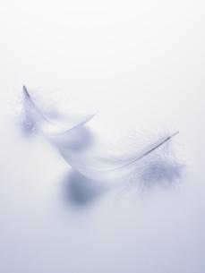 ブルーバックの白い羽根の素材 [FYI00940793]
