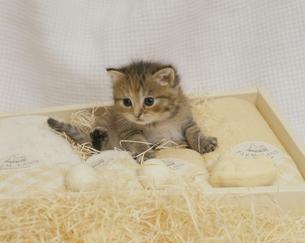 子猫の素材 [FYI00941097]