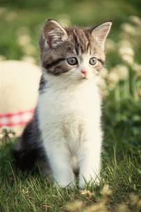 猫の素材 [FYI00941301]