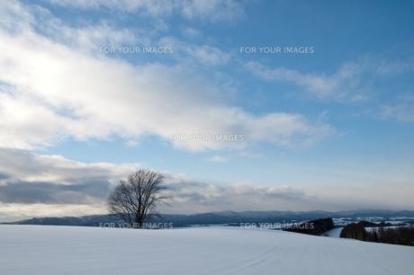 雪原に立つ冬木立 美瑛町の写真素材 [FYI00941843]