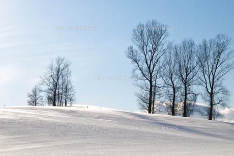 冬晴れの空と雪原の写真素材 [FYI00941857]