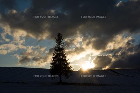 雪の丘に沈む太陽と松の木 美瑛町の写真素材 [FYI00941858]