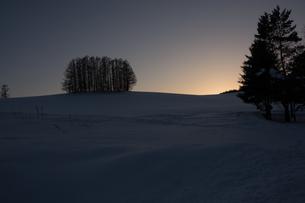 冬の夕暮れの丘とカラマツ林 美瑛町の写真素材 [FYI00941863]