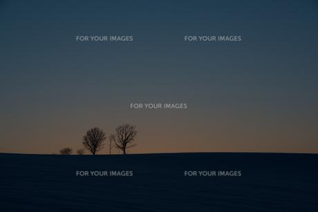 冬の夕暮れの丘と冬木立 美瑛町の写真素材 [FYI00941864]