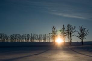 冬の夕暮れの丘とカラマツ並木 美瑛町の写真素材 [FYI00941866]