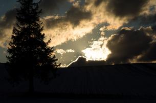 冬の夕暮れと松 美瑛町の写真素材 [FYI00941872]