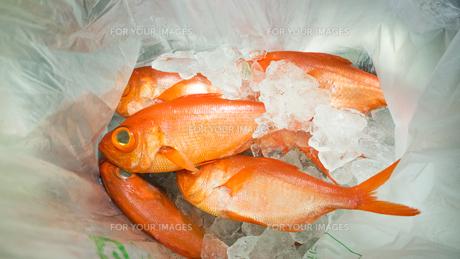 金目鯛の写真素材 [FYI00941916]