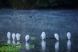 冬の池でじっとしている鳥の写真素材 [FYI00941955]