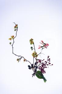 3種類の植物、小さなブーケの写真素材 [FYI00942026]