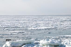 接岸した流氷の写真素材 [FYI00942072]