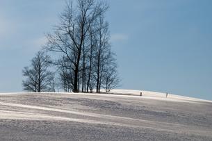 冬木立と青空の写真素材 [FYI00942080]