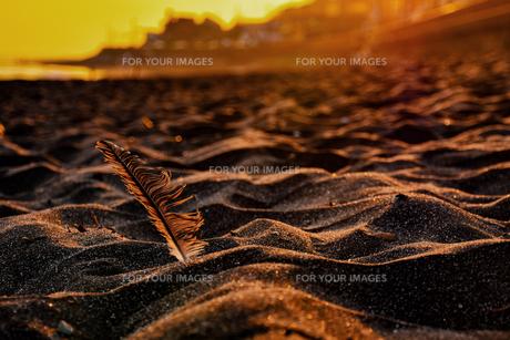 夕方の砂浜の写真素材 [FYI00942098]